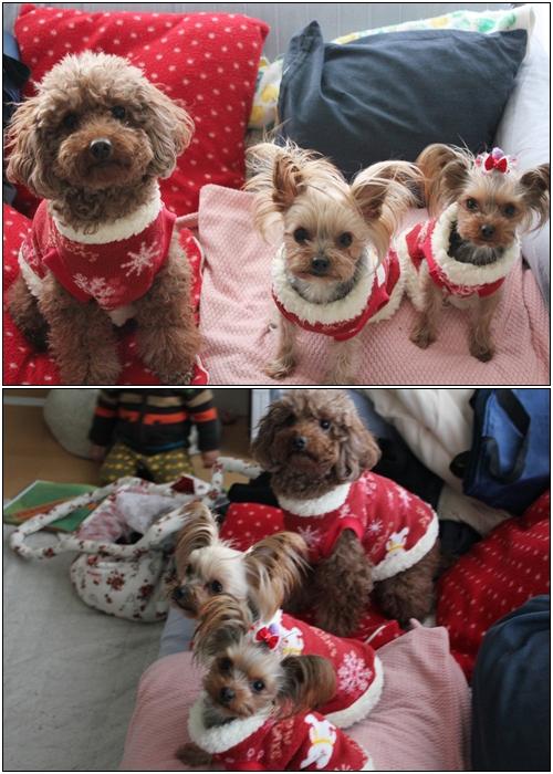 3ワンの赤い服2
