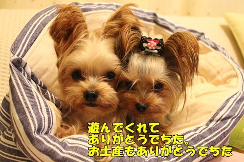 IMG_3435_20111201225005.jpg