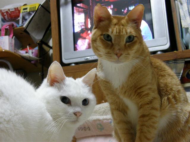 cat 599