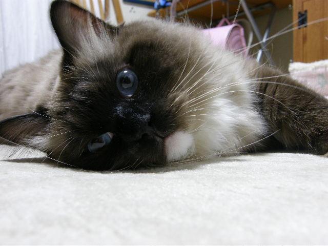 cat 628