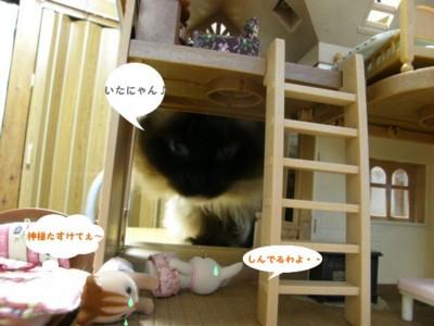 cat 979