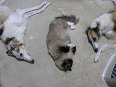 cat+927_convert_20090104172244.jpg