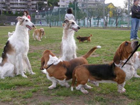 dog+118_convert_20090503213401.jpg