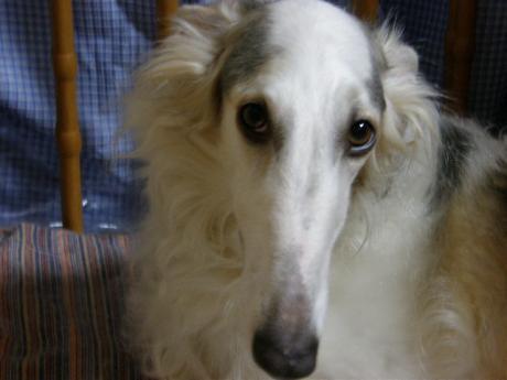 dog+149_convert_20090327224152.jpg