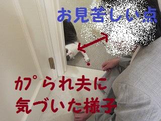 IMG_7551カプられ