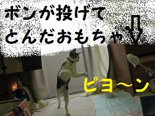IMG_8131ぼん
