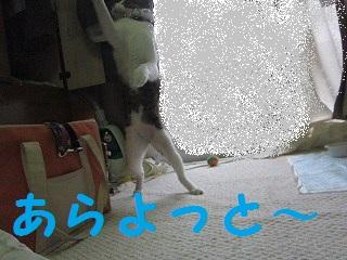 IMG_8123bonちゃん