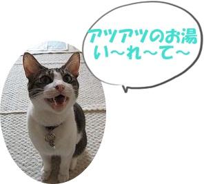 IMG_4558お湯