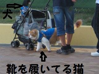 IMG_8055いぬねこ