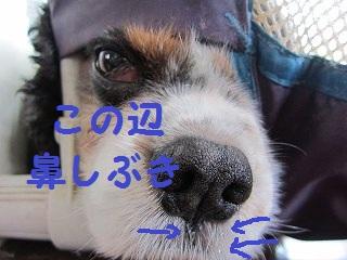 IMG_5253けん