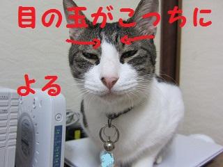 IMG_7876め
