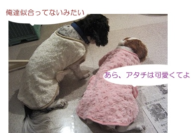 IMG_8316ふく