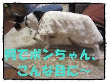 IMG_8308ぼn