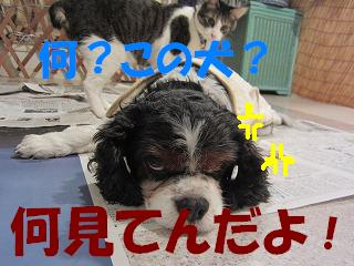 IMG_8323服