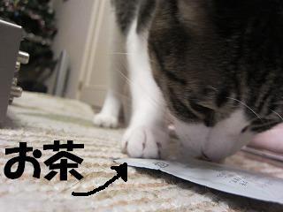 IMG_7461お茶