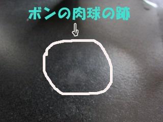 IMG_8463肉球