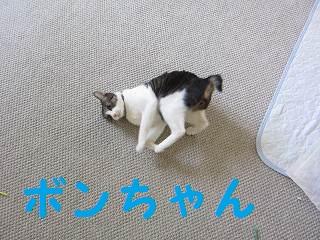 IMG_8402ボンちゃん