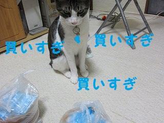 IMG_8806かいすぎ