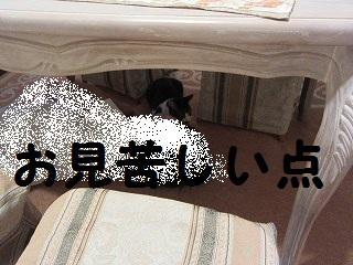 IMG_8651ボン