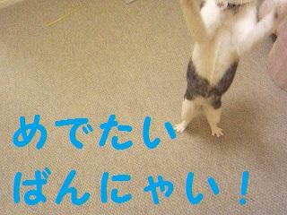IMG_8479ばんにゃい