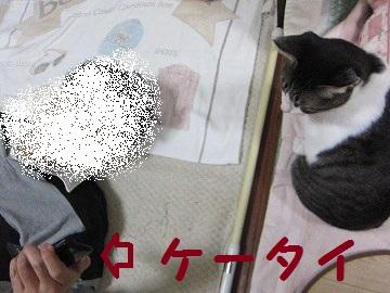 IMG_9374kapuoケータイ
