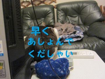 IMG_8548あしょぶ