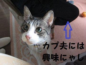 IMG_0285スルー
