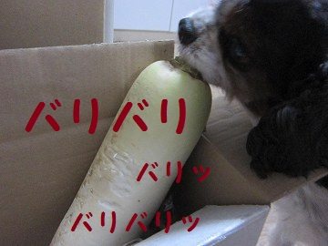 IMG_0945 2011 (6)ストーブ