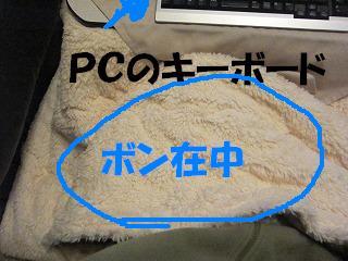 コピー ~  2011IMG_1281 (1)ボン