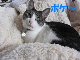 IMG_1437 2011 (12) ポケ~
