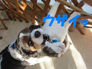 IMG_1325 2011 (7)ウザイ