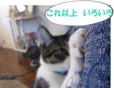 IMG_1833 2011 (11) いろいろ