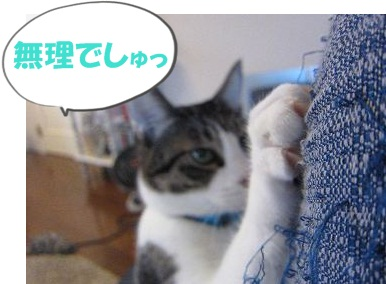 IMG_1855 2011 (10) むり