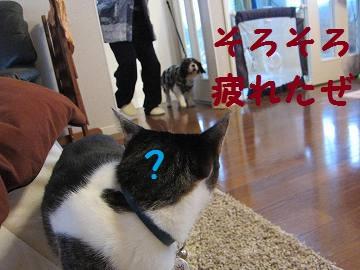 IMG_1833 2011 (13)さんぽ