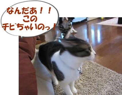IMG_1776 2011 (68)  散歩