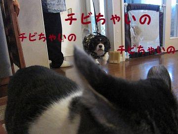 IMG_1776 2011 (71)散歩