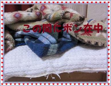 IMG_2174 2011 (2) ぼん