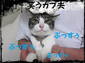 IMG_2784 2012(55)