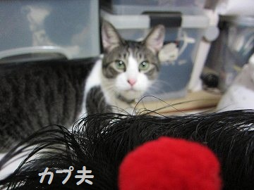 IMG_3479 2012(81)