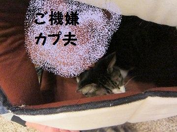 IMG_1106 2011(38)