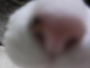 IMG_3423 2012 (32)
