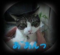 IMG_2784 2012 (28
