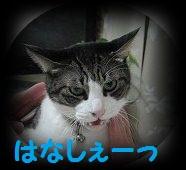 IMG_2784 2012 27b