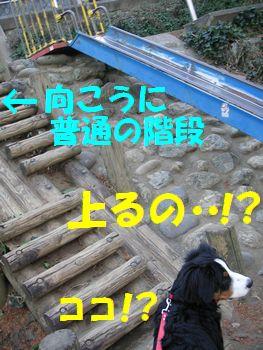 だって階段じゃないよ!?ここ・・・。