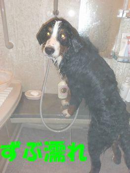 20081_0217_132041-CIMG1321.jpg