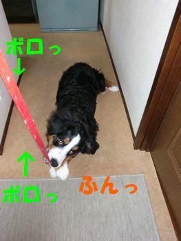 2008_0115_074631-CIMG0004.jpg
