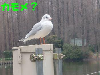 2008_0120_124730-CIMG0213.jpg