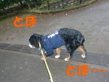 2008_0122_073518-CIMG0265.jpg