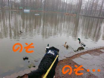 2008_0122_074657-CIMG0269.jpg