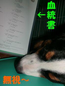 2008_0123_213026-CIMG0329.jpg